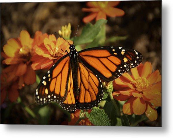 Monarch Spotlight. Metal Print