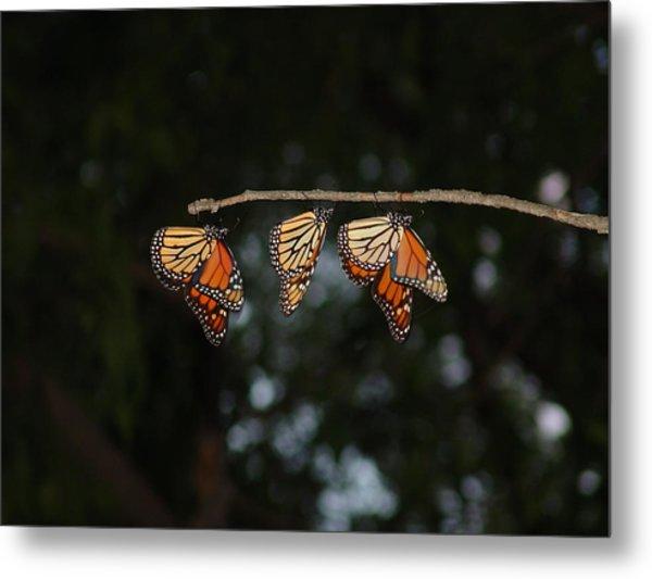 Monarch Trio Metal Print