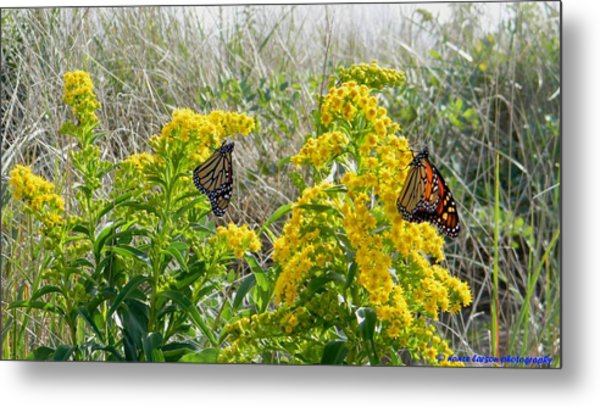 Monarchs On The Beach Metal Print