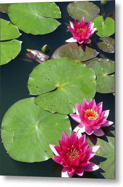 Monet's Waterlilies IIi Metal Print