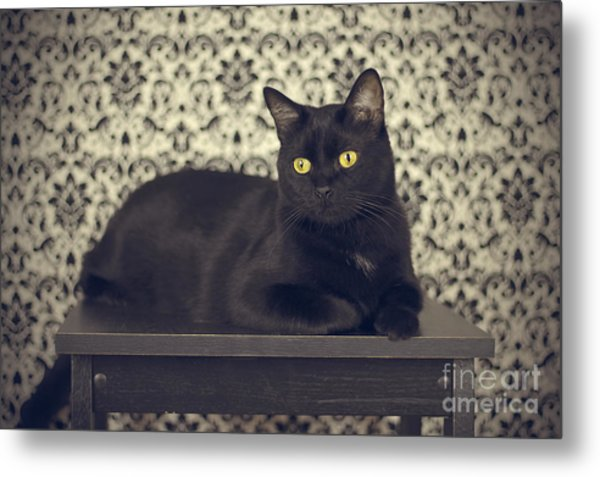 Mongo The Robust Cat Metal Print