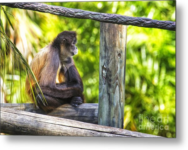 Monkey Sitting Metal Print by Stephanie Hayes