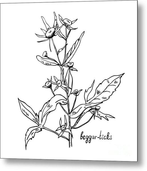 Monochrome Image Beggarticks Herb Metal Print