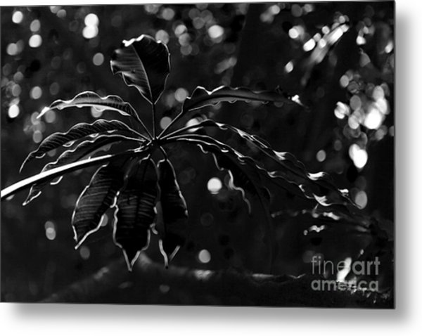 Monochrome Leaf  Metal Print