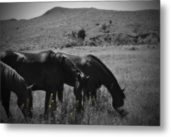 Montana Horses Metal Print