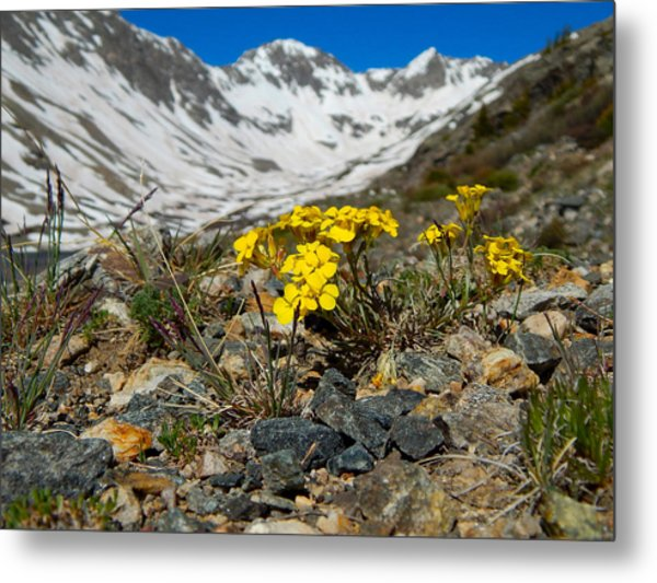 Blue Lakes Colorado Wildflowers Metal Print