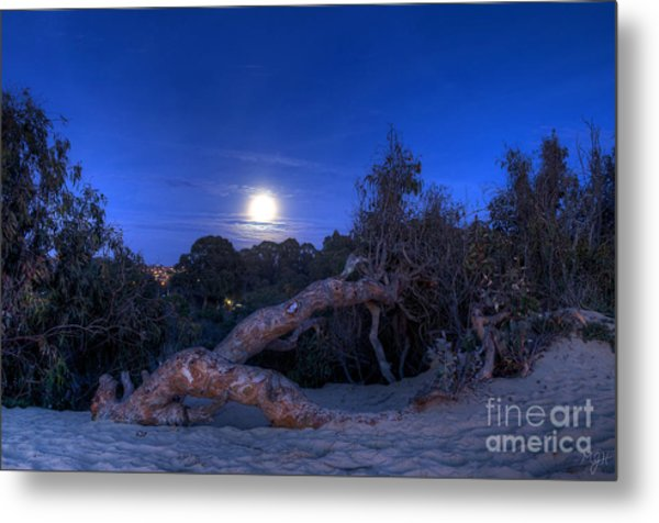 Moon Branch Metal Print