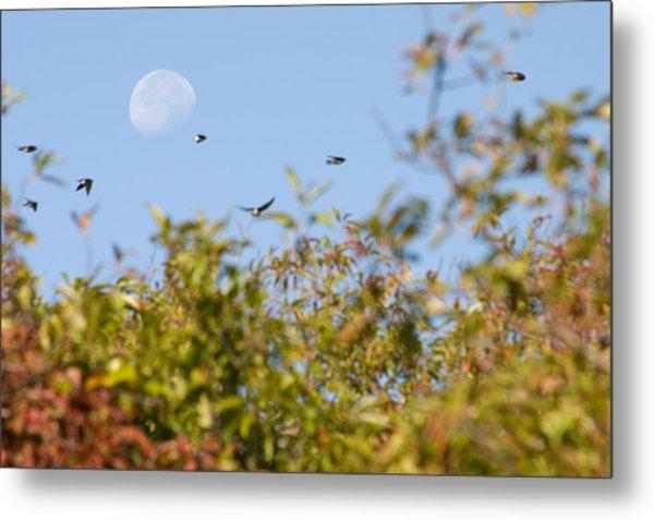 Moon Over The Dunes Metal Print