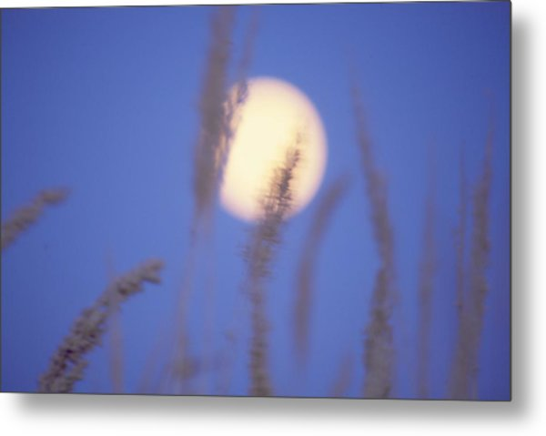 Moongrass Metal Print