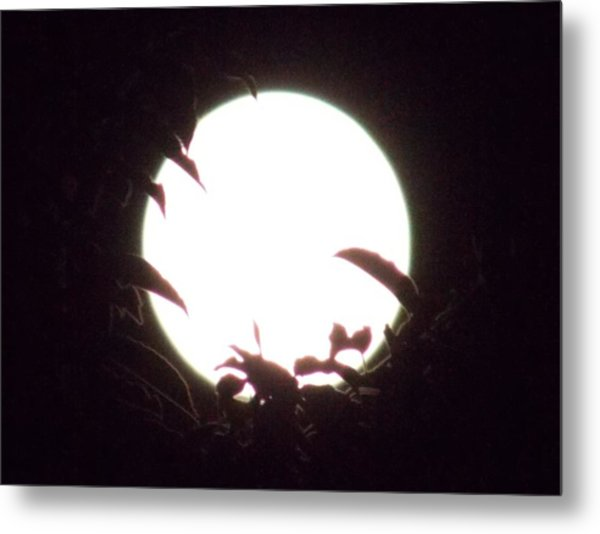 Moonshine 13 The Lonely Beetle Pt2 Metal Print