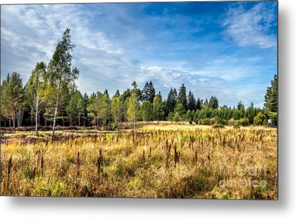 Wetlands In The Black Forest Metal Print