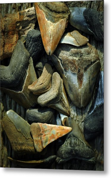 More Megalodon Teeth Metal Print