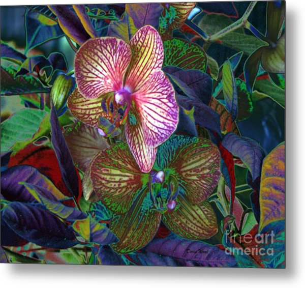 More Orchids Metal Print by Doris Wood