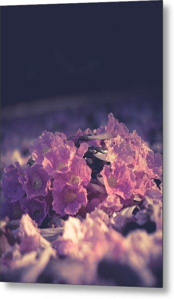 Morning Bloom Metal Print