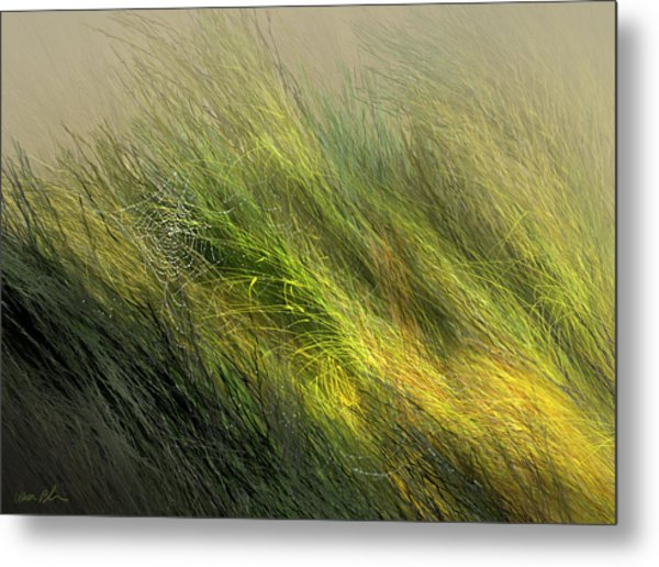 Morning Dew Drops Metal Print
