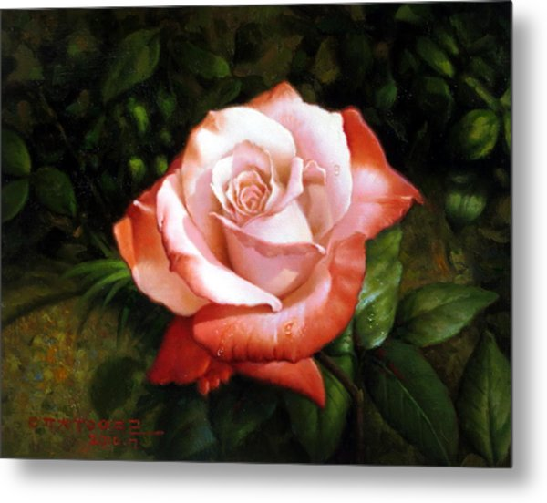 Morning Dew On The Rose Faded Metal Print