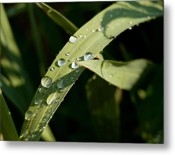 Morning Dew Metal Print by Paige Sims