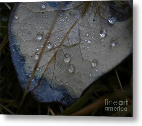 Morning Dew Metal Print by Steven Valkenberg