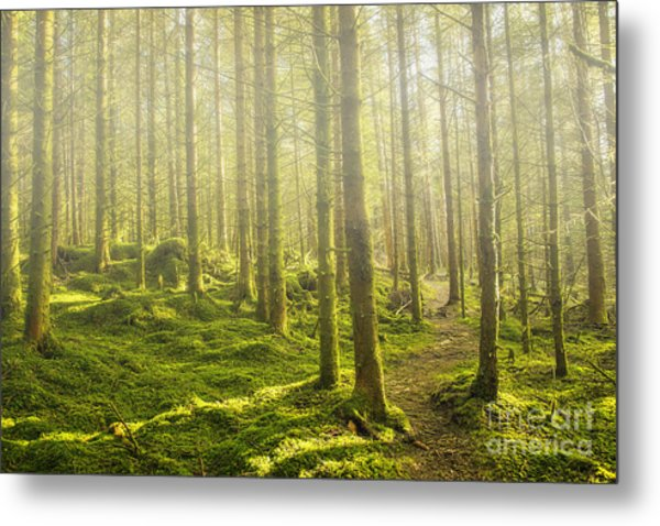 Morning Fog In The Forest Metal Print