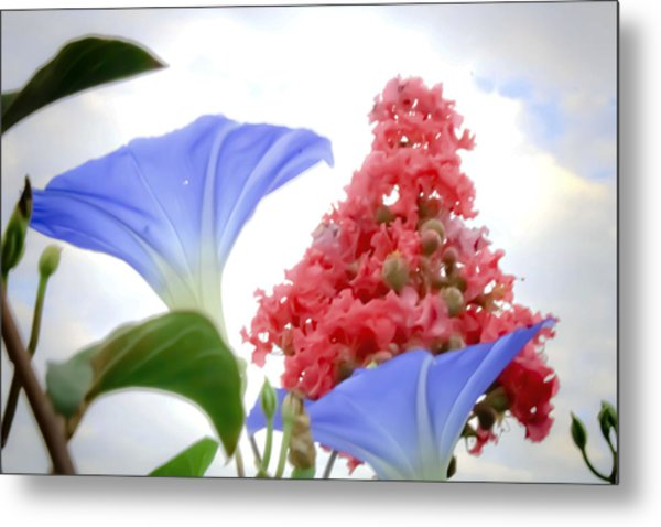Morning Glories In The Garden Metal Print