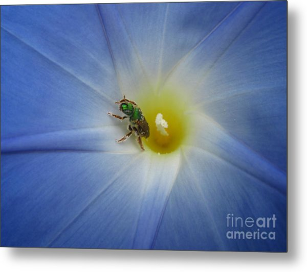 Morning Glory Visitor 1 Metal Print
