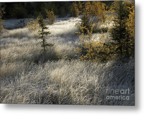 Morning Hoar Frost Metal Print