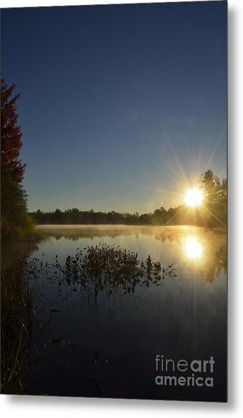 Morning In The North Woods Metal Print