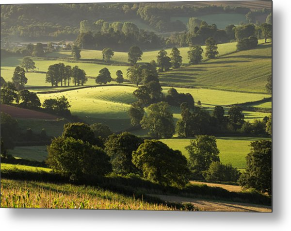 Morning Light On Fields Metal Print