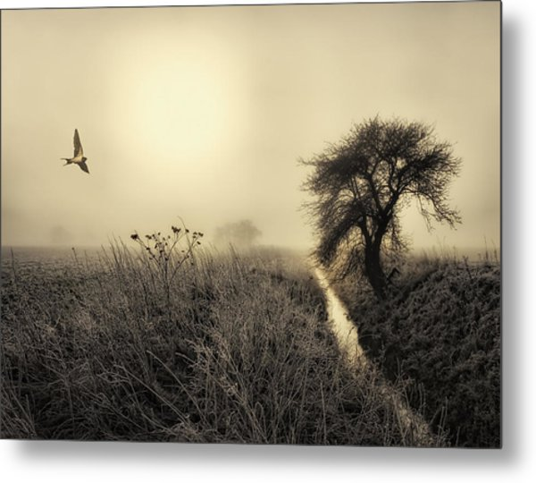 Morning Mood Metal Print