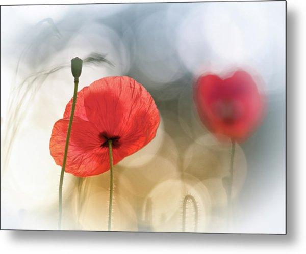Morning Poppies Metal Print