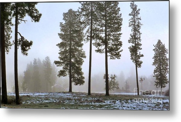 Morning Rime Metal Print