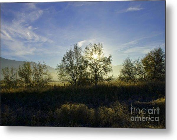 Morning Sun  Metal Print by Nicole Markmann Nelson