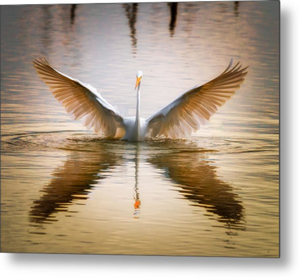 Morning Wings An Egret Awakes Metal Print