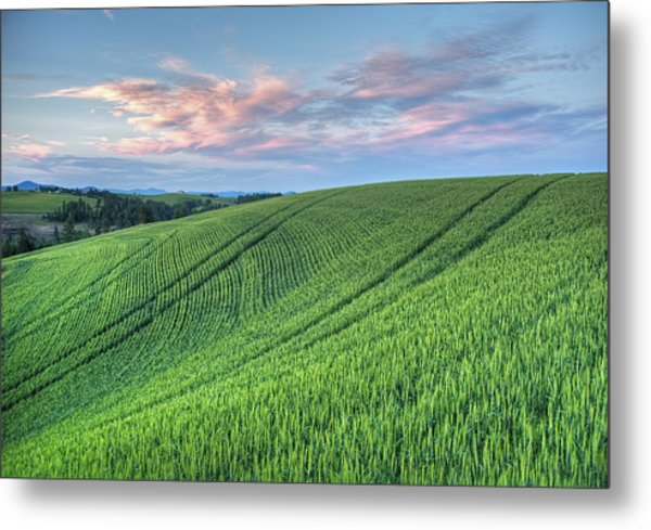 Spring Wheat And Moscow Mtn. Metal Print