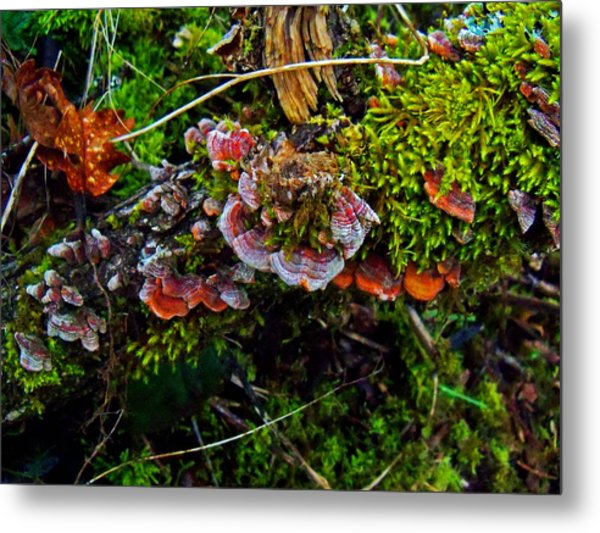 Moss Mushrooms And Knocks Metal Print