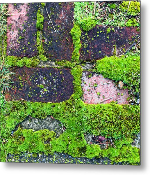 Moss Texture Abstract Metal Print