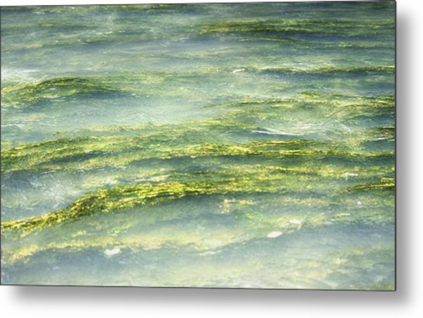 Mossy Tranquility Metal Print