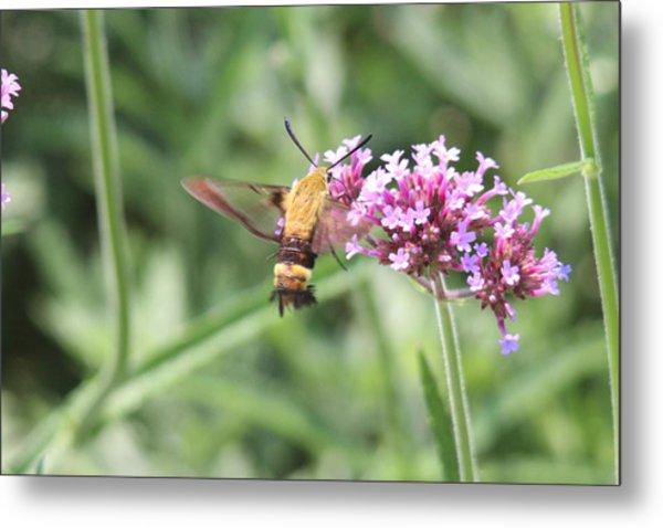 Moth On Flowers Metal Print by Jill Bell