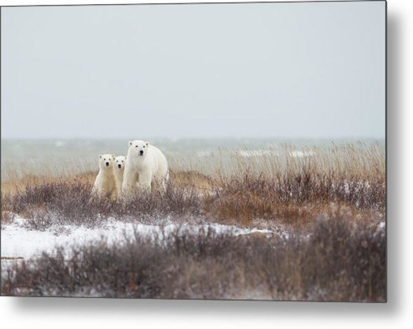Mother & Cubs At The Seaside Metal Print