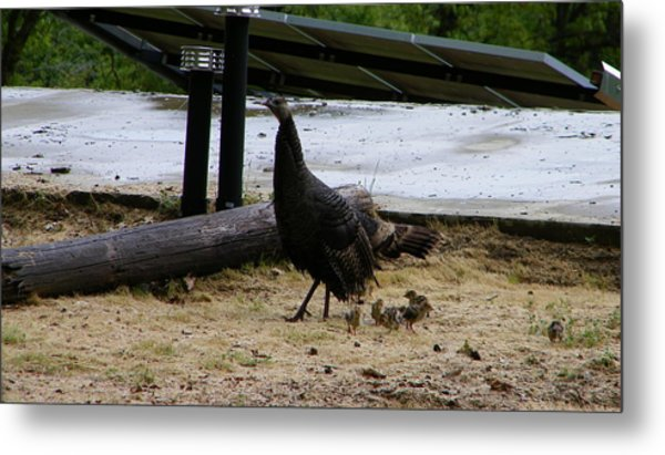 Mother And Babies Metal Print