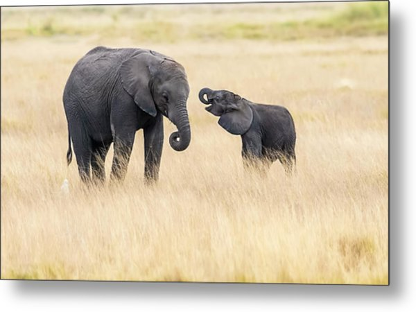 Mother And Baby Elephants Metal Print by Hua Zhu