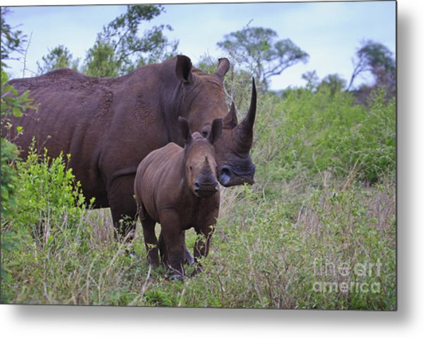 Mother And Baby Rhino Metal Print
