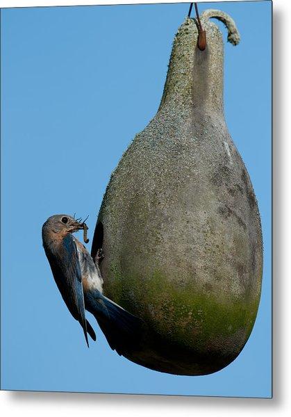 Mother Blue Bird Metal Print