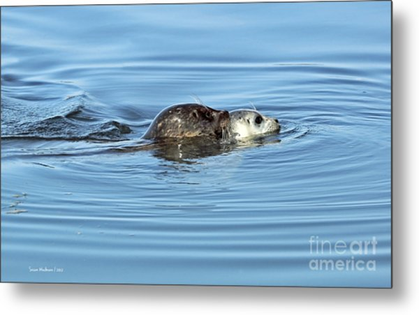 Mother Harbor Seal And Pup Metal Print
