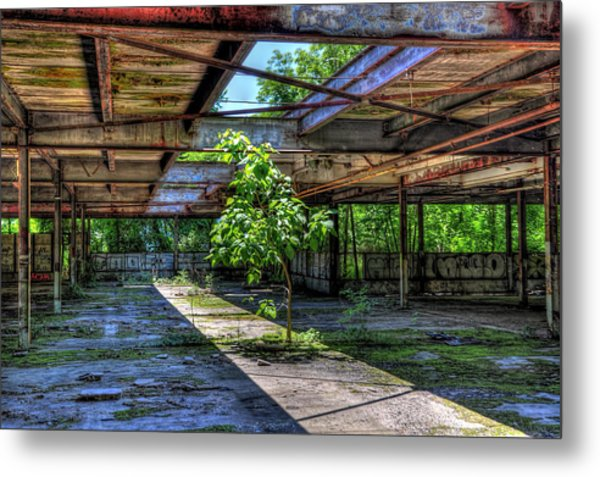 Mother Nature Finds A Way Metal Print by Karl Barth