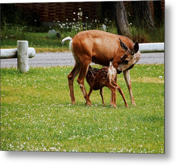 Mother's Milk Metal Print