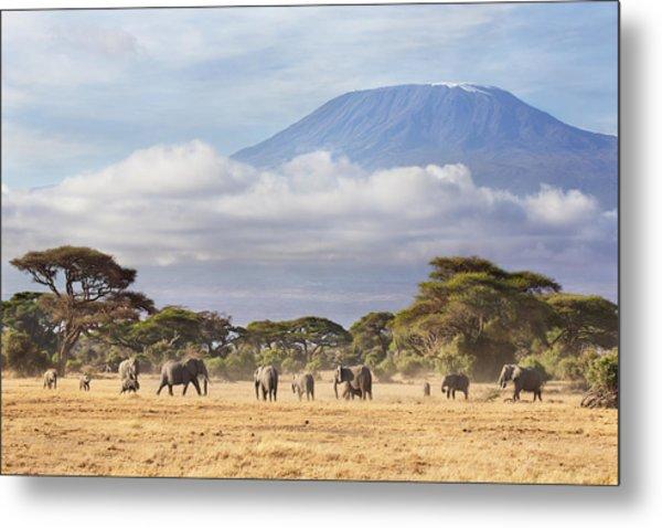 Mount Kilimanjaro Amboseli  Metal Print