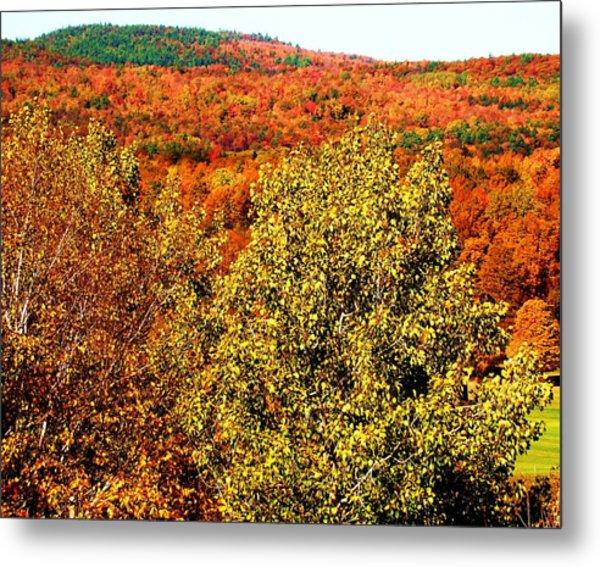 Mountain Foliage Series 016 Metal Print
