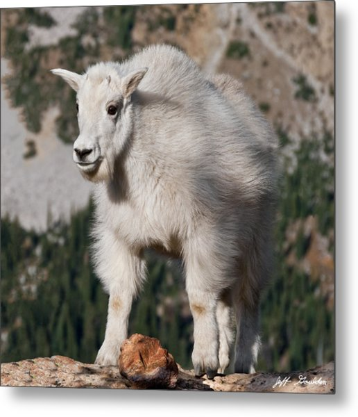 Mountain Goat Kid Standing On A Boulder Metal Print