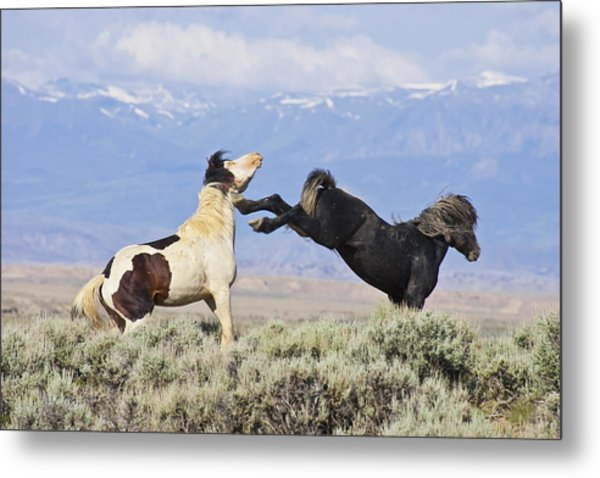 Mountain Mustangs Metal Print